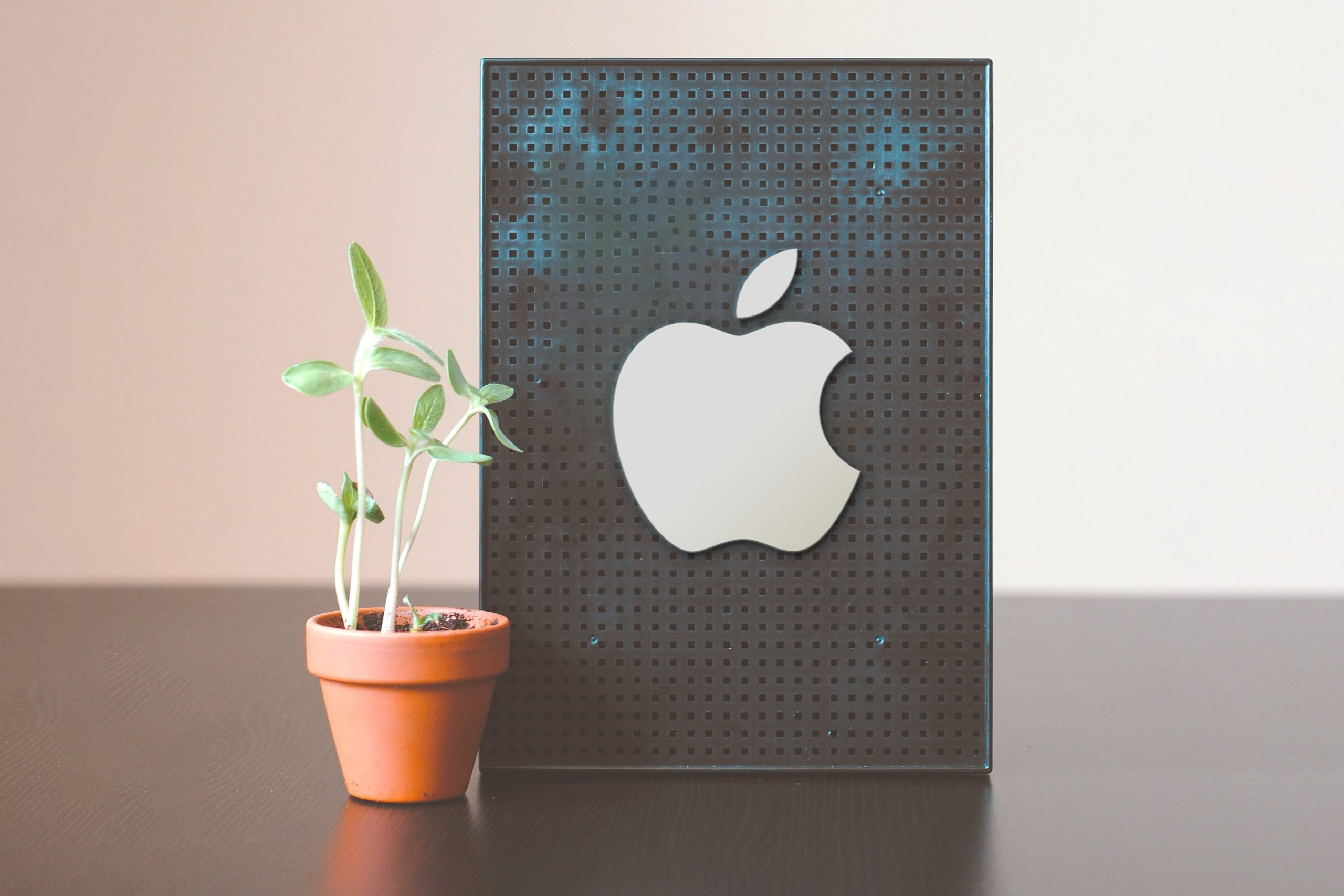 Table Board with plant Logo Mockup Free Download